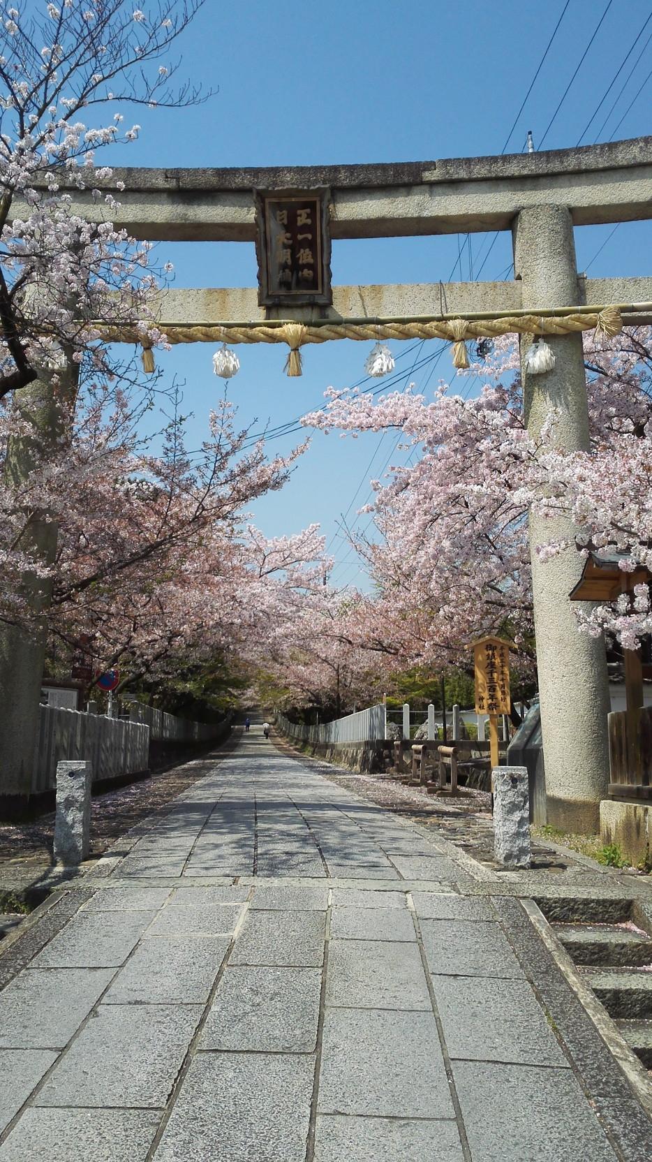 桜咲き誇る神社