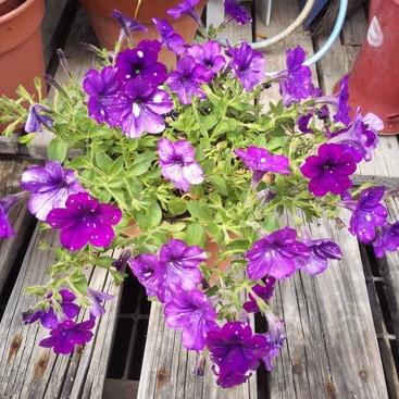 6月の綺麗な花