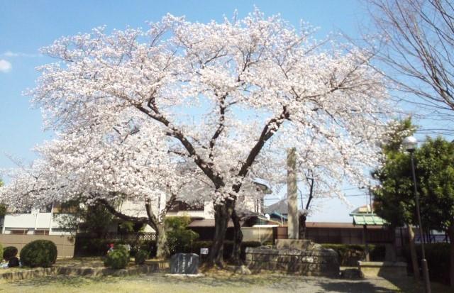 2018年の桜開花時期